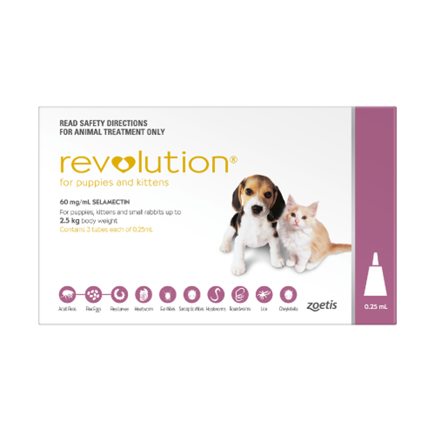 Picture of REVOLUTION PUPPY (PINK)